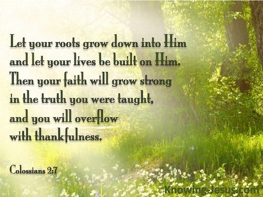 Rooted bible study book